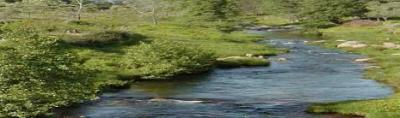 Susurrar al río.